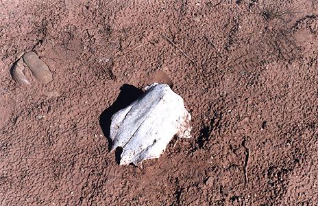 Skull in the sand.